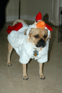 Pets Often Suffer on Halloween