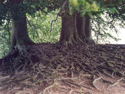 Try Tracing These Roots