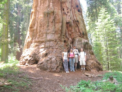How Did The Giant Sequoia Get Its Name?