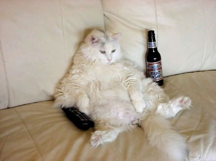 Fat Cats Don't Work...They Just Sit Around, Drink Beer, Watch TV and Count Their Money!