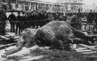 Edison Kills Elephant As Part of Sales Pitch