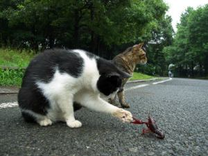 Cat a Crawfish Poacher?