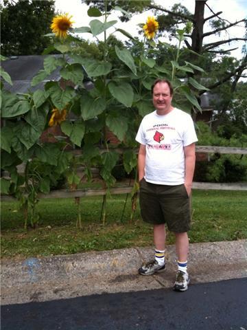 tall sunflowers, fat stomach