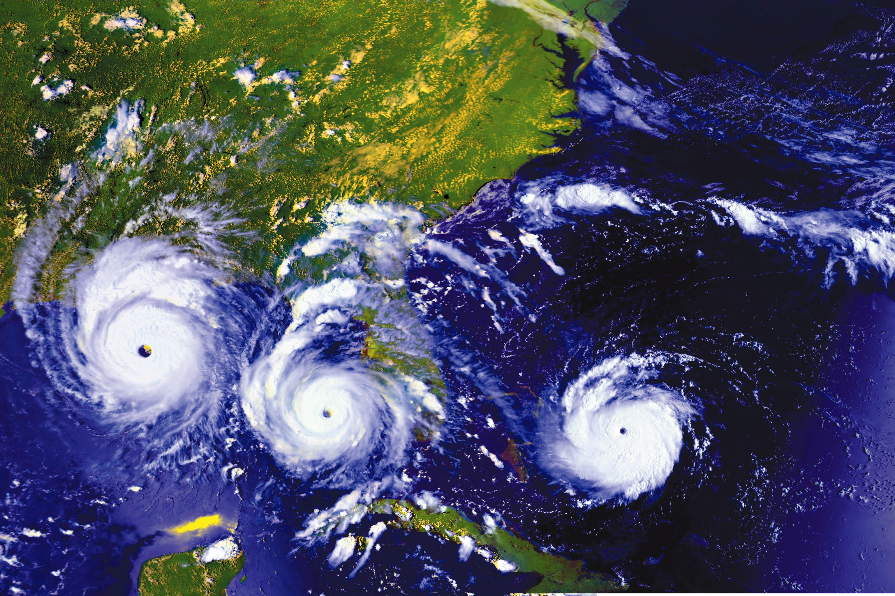 Chimp Challenges Experts For 2010 Hurricane Season Forecast May 28 2010